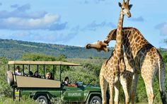 Take a guided tour in the Safari on your honeymoon at the Shamwari Game Reserve, South Africa.