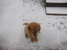 paw prints in the snow | Barkley - fascinated by paw prints in the snow | Puppies