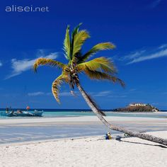 Nosy Be (Madagascar) - Andilana beach ...///.. #travel #trip #beautifuldestination #viaggi #viaggiare #viaggio #voyager #vacanza #traveling #photo #travellife #passionpassport #world #landscapephotography #landscape #landscape_lovers #landscape_captures #traveltheworld #landscapelovers #traveller #travelingram #beautifulplaces #traveladdict #travelphoto #travelpics #scenery #travels #paradise #paesaggi #spiagge #beaches #island #islandtrip