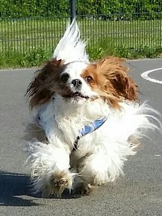 Cavalier on the wind