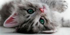 I kočku mohou trápit zdravotní problémy Cleaning Window Tracks, Litter Robot, How To Clean Granite, Cat Pee, Cat Shedding, Owning A Cat, Clean House, Kitty, Pets