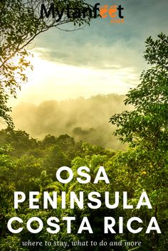 Osa Peninsula Travel Guide: Information and In-depth Tips for Visiting Costa Rica With Kids, Living In Costa Rica, Travel Guides, Travel Tips, Travel Plan, Travel Advice, Osa Peninsula Costa Rica, Road Trip Planner, Costa Rica Travel