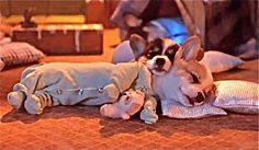 PJ Corgi...(this occurs once every 4 hours for exactly 1 minute..tee hee to the new corgi parents!!!