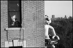 Elliott Erwitt on the trail of the Pink Panther.  Macy's Thanksgiving Day Parade, NYC, 1988