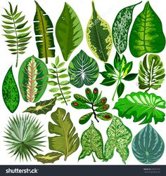 Set Of Tropical Leaves Stock Vector Illustration 235257187 ...