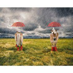 Pony med prickigt paraply