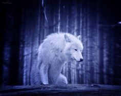 """When you have the courage to face your fears, silent strength will be given to you.""""  - Jasmeine Moonsong"""