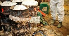 Le site de l'entreprise Bissot-Witters a été abandonné en l'état en 2013, suite à l'arrêt des activités de l'entreprise. Des produits dangereux viennent d'y être retrouvés. #spaque #remediation #fricheindustrielle #rehabilitation #brownfields #cyanure #interventionenurgence