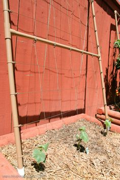 Build your own vertical gardening trellis out of PVC