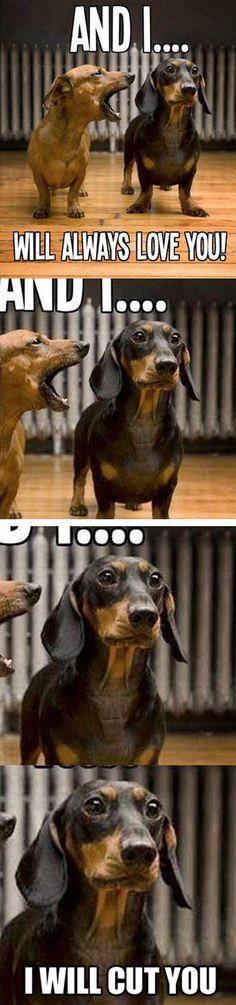 I love animal memes. Scarlett and Bubba!