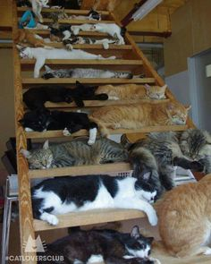 Crazy cat lady stairway to heaven Cute Kittens, Cats And Kittens, Kitty Cats, Animals And Pets, Funny Animals, Cute Animals, Funny Cats, Animals Images, Crazy Cat Lady