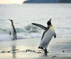 penguin #penguin #animallovers #animals