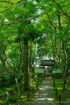 地蔵院・竹の寺 in Kyoto, love all the greenery!