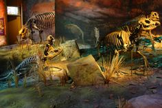 The Gray Fossil Site, located near Johnson City, Tennessee, is one of the richest depositories of Late Miocene fossils in North America. ...