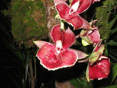 http://clairemy.hubpages.com/hub/Some-Strange-and-Wonderful-Plants