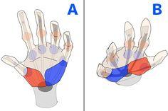 骨格や筋肉をチェック! 腕と手の描き方講座|イラストの描き方  手の描き方メイキング 4/4    How to draw arms and hands by checking bones and muscle | Illustration tutorial  Drawing a hand 4/4