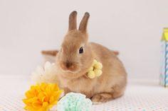 Bunnys wünschen frohe Ostern! http://web.de/magazine/unterhaltung/lifestyle/model-hasen-30555716