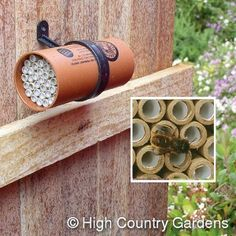 Bees Need Homes! There are more than 3000 species of wild bees in North America but intensive agriculture and development has reduced the diversity of wildflowers and destroyed natural nest sites. You can give them a helping hand, improve pollination in your garden and enjoy creating a natural habitat.