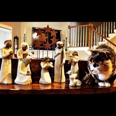 Tonight's role of camel will be played by...a cat. #nbcclt