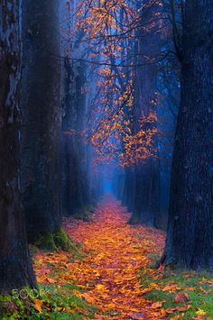 Nice to meet you. Beautiful Landscapes, Beautiful Images, Nature Pictures, Cool Pictures, Mystical Forest, Autumn Scenes, Tree Forest, Forest Trail, Autumn Forest
