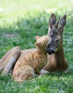 Tabby & Kangaroo