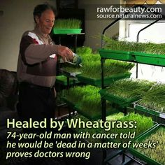 Wheatgrass has huge amounts of Vitamin B17, which Doctors aren't kegally allowed to say cures cancer. (Big Pharma took it off the market because it costs them too much money). Vitamin B17 and an alkaline diet will cure anyone of cancer, and prevent anyone from ever getting it! Amazing! God gives us all we ever need