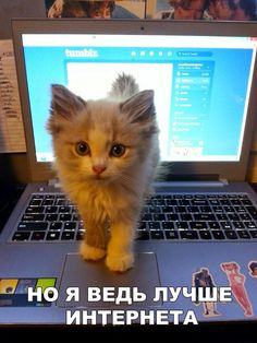 Everyone love cats and you are also.I hope you want to some laugh by using some decent memes. Now we have a great collection of some Mean Cat Memes that are so decent type memes.I'm sure it will make you laugh and happy for whole day. Mean Cat Memes Mean… Baby Animals, Funny Animals, Cute Animals, Animal Memes, Animals Images, Crazy Cat Lady, Crazy Cats, Pc Meme, What Do You Mean