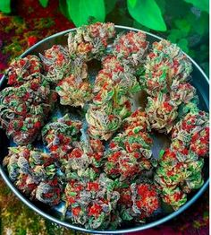 70 Best WeeD images in 2019