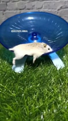 Cute Little Animals, Cute Funny Animals, Funny Cute, Funny Dogs, Cute Cats, Animal Humour, Animal Antics, Cute Hamsters, Cool Pets