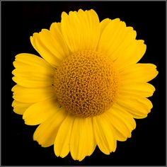 yellow things bing images yellow love pinterest yellow things - Pictures Of The Color Yellow