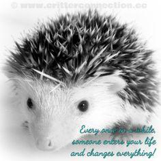 #millermeade #hedgehog #life #love #adorable   www.critterconnection.cc