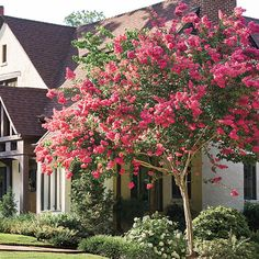 The Complete Guide to Crepe Myrtles - Southern Living
