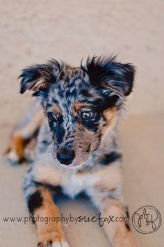 Photography by Sue Fox: Aussie love...