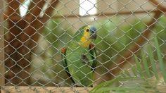 Olá,   Primeiramente, muito obrigada por ter assinado o abaixo-assinado para libertar os dois papagaios expostos na Bienal do Mercosul. Nossa mobilização está surtindo efeito e a Justiça já decretou que os animais sejam retirados da obra, como você pode ver neste link: http://on.fb.me/1Nqx6om  Porém, a Bienal continua respondendo com recursos para manter os animais presos. Eles não querem ouvir os pedidos dos defensores dos animais e zelar pelo bem estar dos papagaios.    É por isso que…