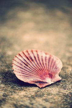 """""""Hatalmas kagylógyűjteményem van, amit elszórva tartok a világ tengerpartjain."""