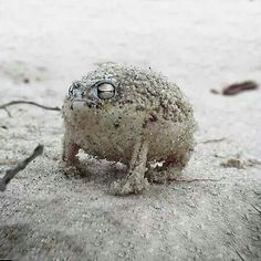 Squeaky frog of cuteness!