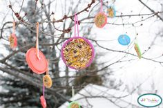 Play-doh lid bird feeder.  Cute and simple idea for the kids during the winter!