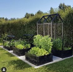 How to Make a Simple Garden Planter Box. Grow your own veggies this year with a simple garden box. You can use the box for years to come for healthy homegrown vegetables! Small Vegetable Gardens, Vegetable Garden Design, Vegetable Gardening, Garden Planter Boxes, Box Garden, Container Garden, Potager Garden, Dream Garden, Garden Planning
