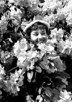 Audrey Hepburn playfully poses among a blooming azeala shrug at London's Kew Gardens.May 13, 1950.Photos by Bert Hardy.