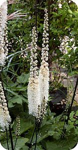 E-mail - Stella Ruesink-Helmig - Outlook Small Vegetable Gardens, Smart Garden, Garden Deco, White Gardens, Garden Boxes, Dream Garden, Garden Plants, Garden Pond, Garden Inspiration