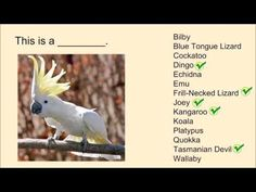 Australian Animals I