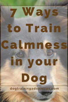 7 Ways to Train Calmness in your Dog | Dog Obedience Training | Dog Training Tips | Dog Training Ideas | http://www.dogtrainingadvicetips.com/7-ways-train-calmness-dog #dogtrainingtips #DogObedience #dogobidience