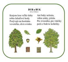 Flora, Kindergarten, Education, School, Plants, Kindergartens, Onderwijs, Learning, Preschool
