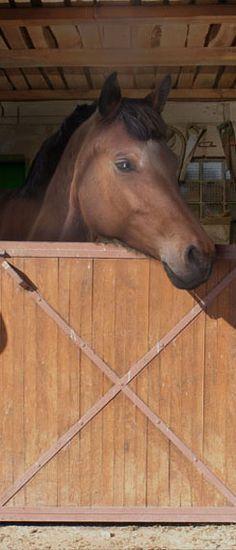 Meisjeskamer thema paarden met deze paarden deur poster Bull Terrier, Horses, Interior Design, Architecture, Animals, Random, Design Interiors, Animales, Home Interior Design