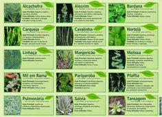 ervas aromaticas beneficios - Pesquisa Google
