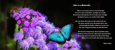 Abraham Hicks - The trap of needing the approval of others Blue Butterfly Wallpaper, Moth, Insects, Pairs, Animals, Butterflies, Abraham Hicks, Caterpillar, Abundance
