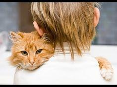 Cats Love Their Humans - LoveMeow