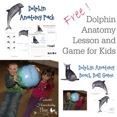 Free Dolphin Anatomy Lesson and Game for Kids - Enchanted Homeschooling Mom