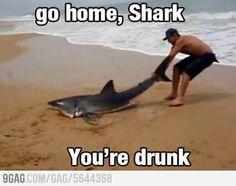 Rentre à la maison, requin, tu es saoul !