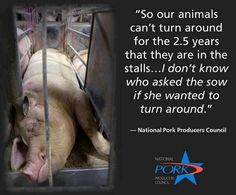 Pigs deserve more dignity